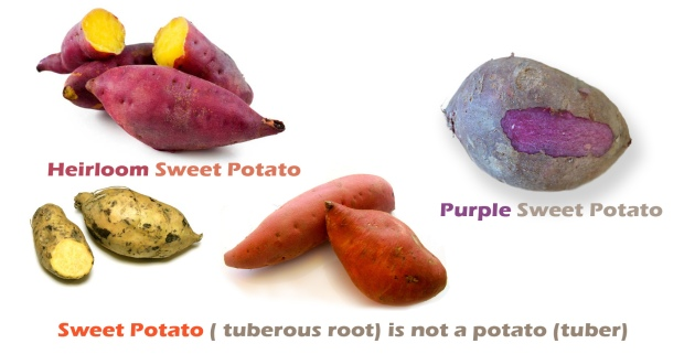 sweet-potato-heirloom
