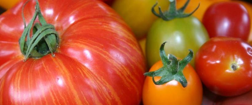 tomato-banner