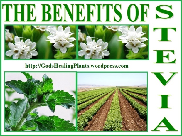 All Natural, Healthy Stevia